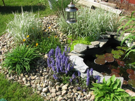 pond2 may11
