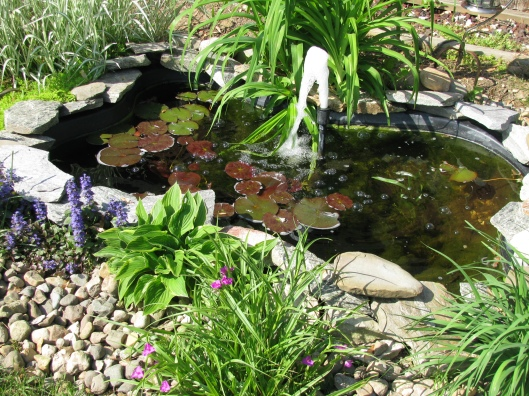 pond3may11